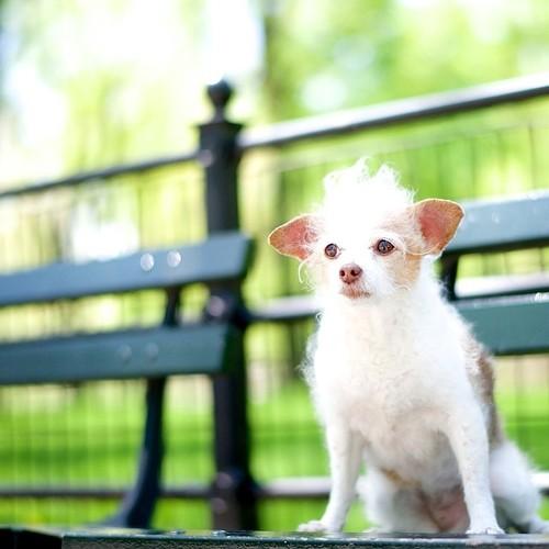 Fotos de cachorros fofos